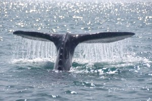 Fluke with Water
