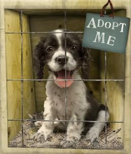 shelter-dog-month