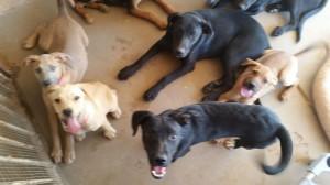 Puppies2014