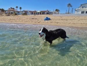 Dogs-Love-the-Beach-Too-1