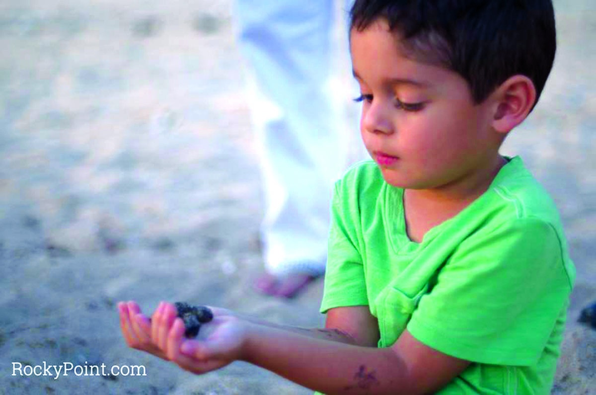 Sea Turtle release in Rocky Point
