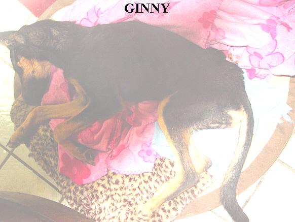 By Nancy Phelan/Founder of Animal Adoption Center of Rocky Point Inc.