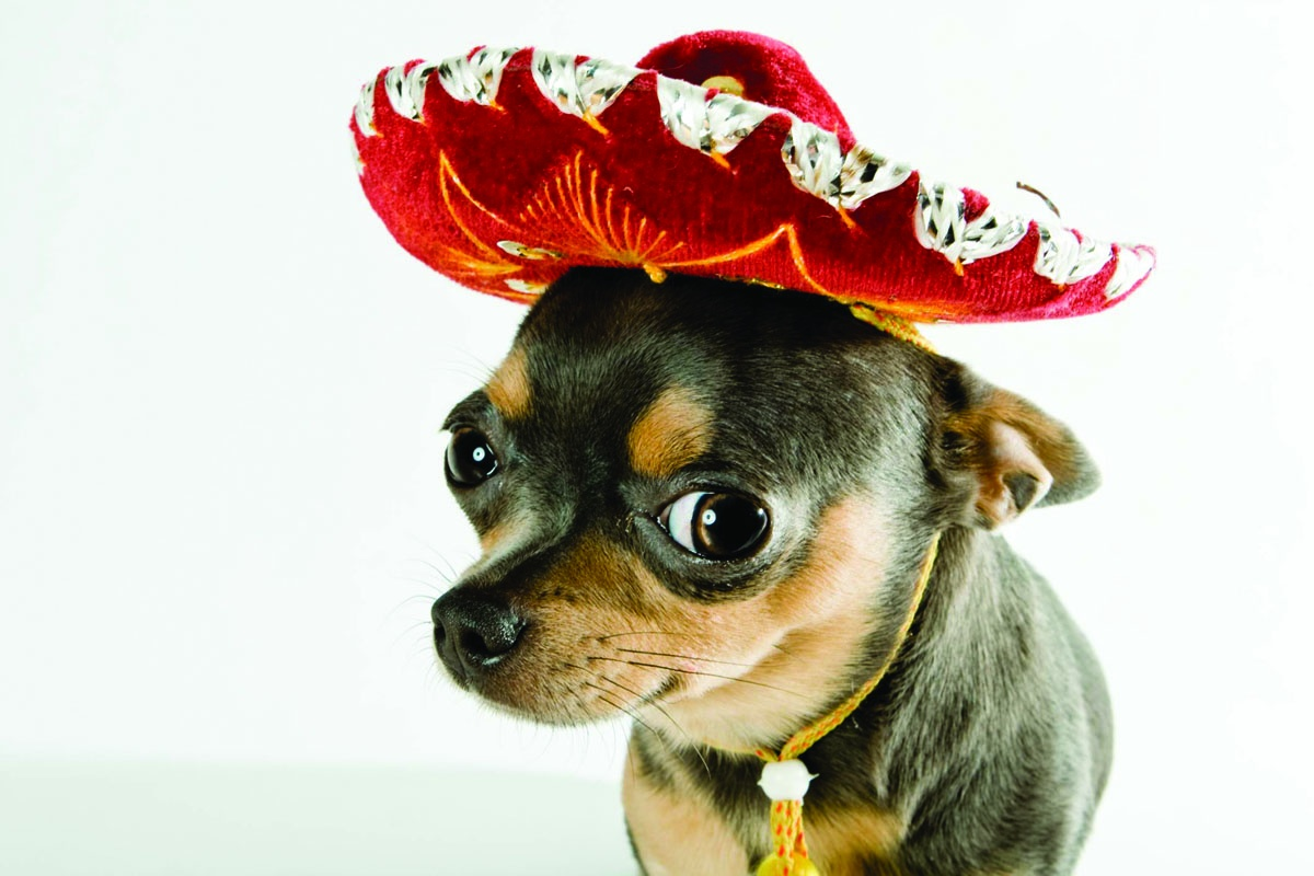 mexican hat dog