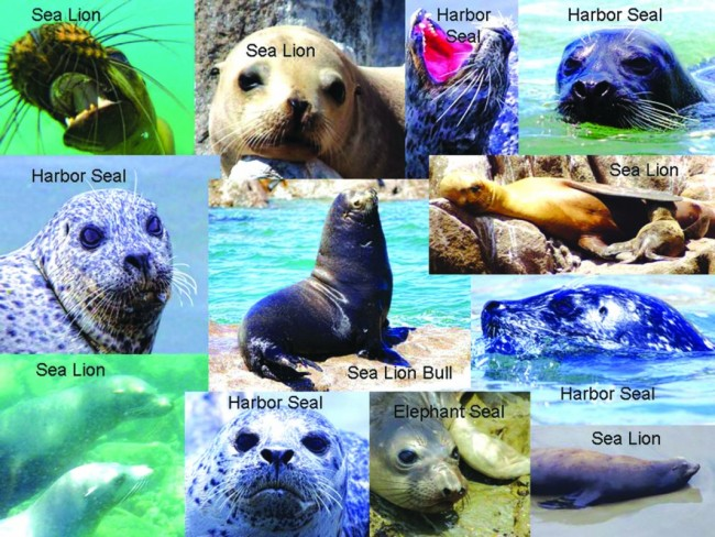 Sea Lion vs Seal Answer key