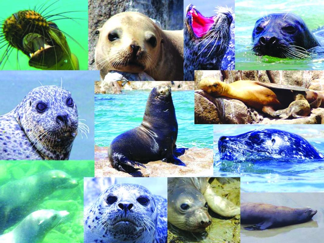 Am I a Sea Lion or a Seal?