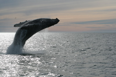 A month for Whales and Lovers