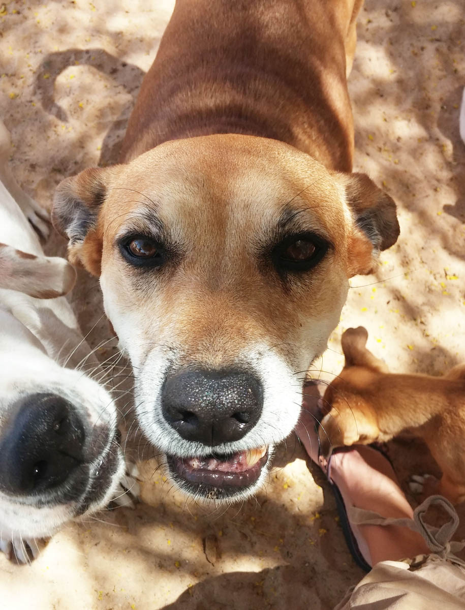 """BARB'S DOG RESCUE NEWSLETTER """"Help Us Help Them"""""""
