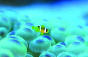 Little-Fish