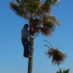 Trimming a Palm Tree