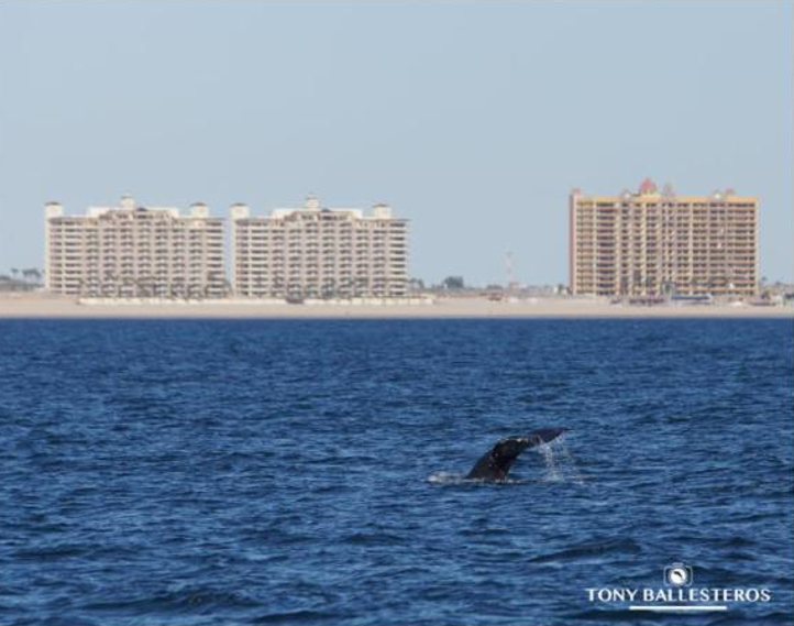 Whale Watching Season Begins – What You Need to Know