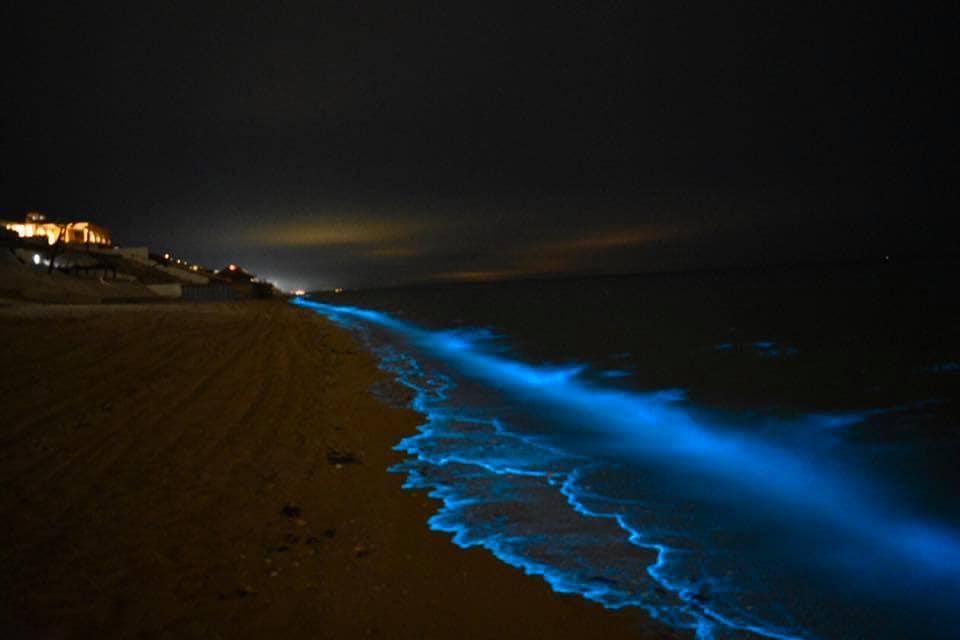 Blue Fluorescent Reflections on Puerto Peñasco Beaches