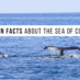 10 Fun Facts About the Sea of Cortez
